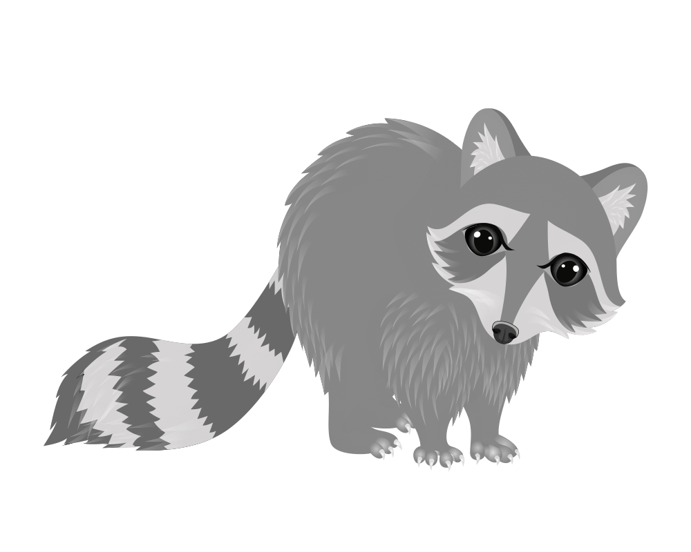 raccoon - animals