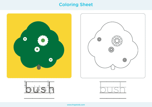 Bush - Camping Coloring Pages
